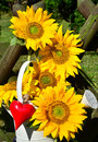 Sunflower heart red love yellow in the garden decoration Royalty Free Stock Photo