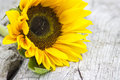 Sunflower helianthus on old wooden background Royalty Free Stock Images