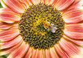 Sunflower with humble Stock Images