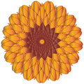 Sunflower or Marigold Vector Royalty Free Stock Image
