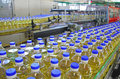 Sunflower oil in the bottle moving on production line Royalty Free Stock Photos