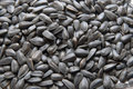 Sunflower seed Royalty Free Stock Photography