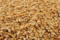 Sunflower seed backgrounds a background of roasted salted hulled seeds Royalty Free Stock Images