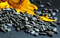 Sunflower seeds on black  background, selective focus Royalty Free Stock Photo