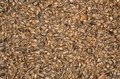 Sunflower seeds closeup photo of dirty background Royalty Free Stock Image