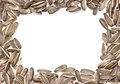 Sunflower seeds frame on white background Royalty Free Stock Image