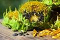 Sunflower seeds Royalty Free Stock Photo