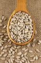 Sunflower seeds shelled raw in wooden spoon on burlap Royalty Free Stock Photography