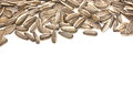 Sunflower seeds with text space Stock Images