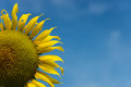 Sunflower and Sky background Royalty Free Stock Photo