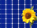 Sunflower and solar panel Royalty Free Stock Photos
