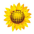 Sunflower.Spring flower Stock Photography
