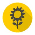 Sunflower symbol icon