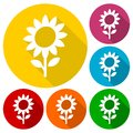Sunflower symbol icons set with long shadow