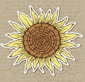 Sunflower vector illustration of stylized Stock Photography