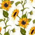 Sunflower vector seamless pattern floral texture on bright background