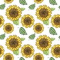 Sunflower vector seamless pattern with green leaves, imitating ink and watercolor on white background. Hand-drawn flower heads. Royalty Free Stock Photo