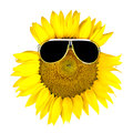 Sunflower wearing black sunglasses Royalty Free Stock Photos