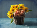 Sunflowers and apricots bouquet of in the basket Stock Photos