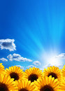 Sunflowers. Blue sky, clouds Royalty Free Stock Photo
