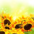 Sunflowers collage with on blurred yellow background Stock Photo