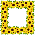 Sunflowers frame with calendula flowers and green leaves Royalty Free Stock Image