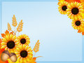 Sunflowers frame illustration of in autumn Royalty Free Stock Photo