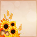 Sunflowers frame illustration of in autumn Royalty Free Stock Photography