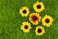 Sunflowers and grass Royalty Free Stock Images