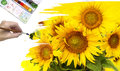 Sunflowers hand paint picture with Stock Images