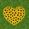 Sunflowers in a heart shape Royalty Free Stock Photo