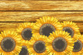 Sunflowers and old wall Stock Photography