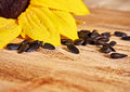 Sunflowers and scattered sunflower seeds Royalty Free Stock Photo