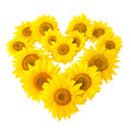 Sunflowers in shape of heart isolated on white background Stock Images