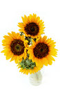 Sunflowers in the vase Royalty Free Stock Image