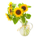 Sunflowers in vase Stock Photos