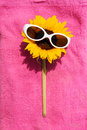 Sunglasses on Sunflower Royalty Free Stock Images