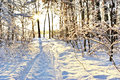 Sunlight among the branches of trees in snowy winter forest Royalty Free Stock Photos