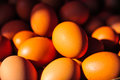 Sunlight on the eggs Royalty Free Stock Photo