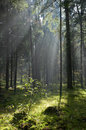 Sunlight entering misty forest Royalty Free Stock Photography
