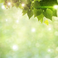 Sunlight through foliage Stock Image
