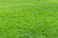 Sunlight Fresh Natural Grass B...