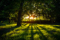 Sunlight green forest in summer time Royalty Free Stock Photo
