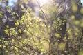 Sunlight in Latvian forest.
