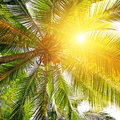 Sunlight through the leaves of palm trees Stock Photography
