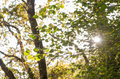 Sunlight and lens flare, tree leaves Royalty Free Stock Photo