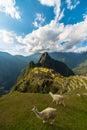 Sunlight on Machu Picchu, Peru, with llamas Royalty Free Stock Photo
