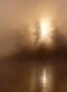 Sunlight mist trees Royalty Free Stock Photo
