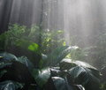 Sunlight And Mist On Tropical Plants Royalty Free Stock Photo