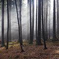 Sunlight in misty autumn forest Royalty Free Stock Photo